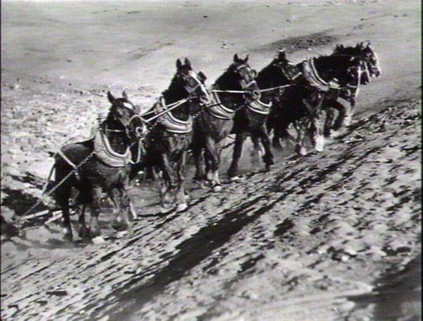 Horse teams