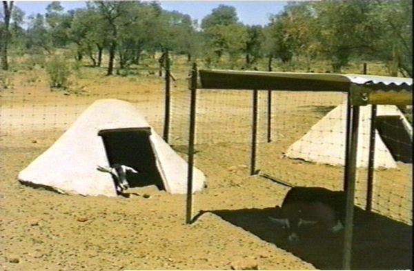 Weethalle, Mohair goat farm