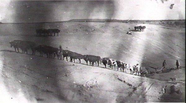Cattle train