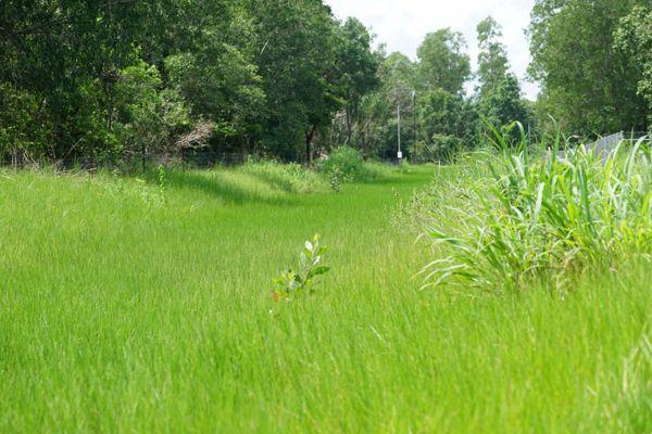 Litchfield wetlands in danger
